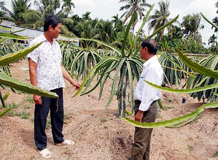 Hậu Giang - Phát triển mô hình kinh tế nông nghiệp