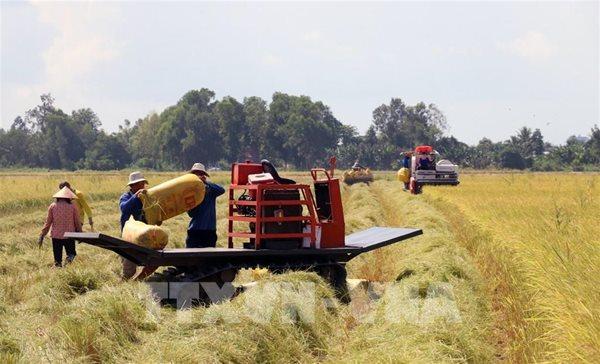 Gạo thơm nào được miễn thuế nhập khẩu khi xuất sang EU